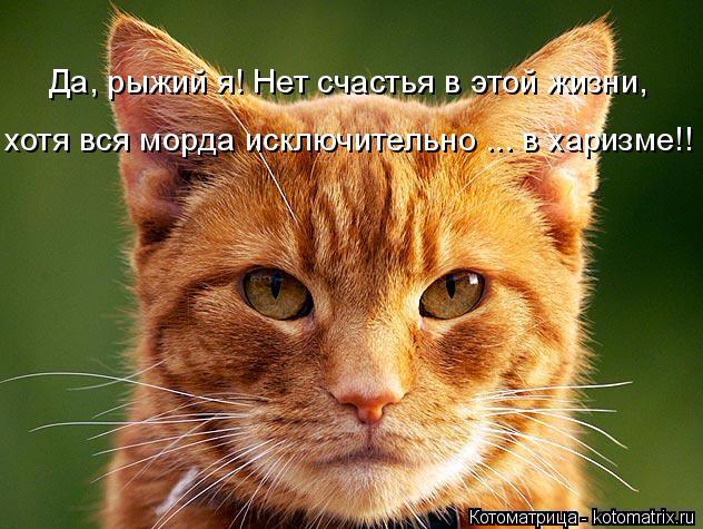 kotomatritsa_7O (632x475, 354Kb)