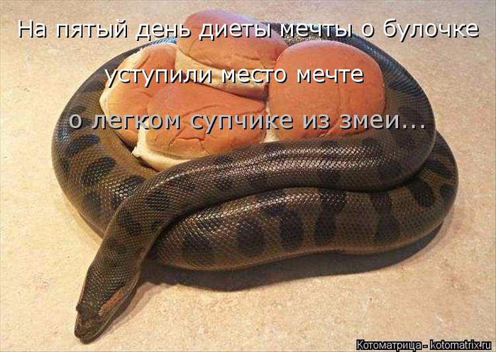 kotomatritsa_cT (700x497, 397Kb)