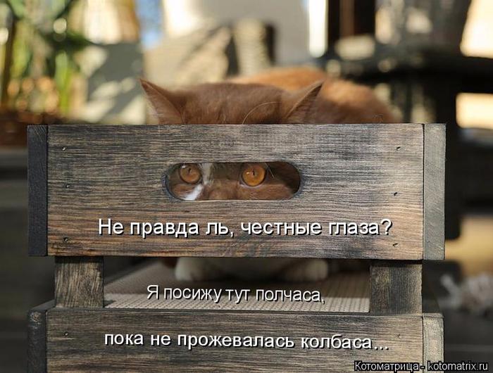 kotomatritsa_ef (700x530, 360Kb)