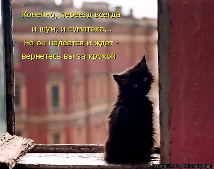 kotomatritsa_Ff (700x555, 336Kb)