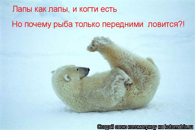 kotomatritsa_g (640x429, 180Kb)