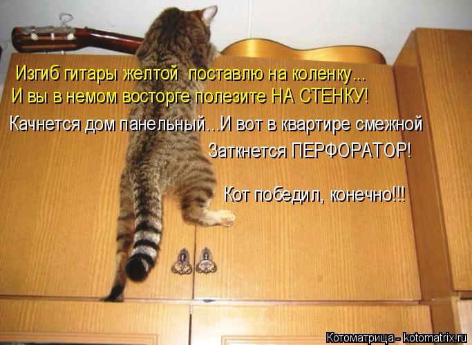 kotomatritsa_gn (683x499, 325Kb)