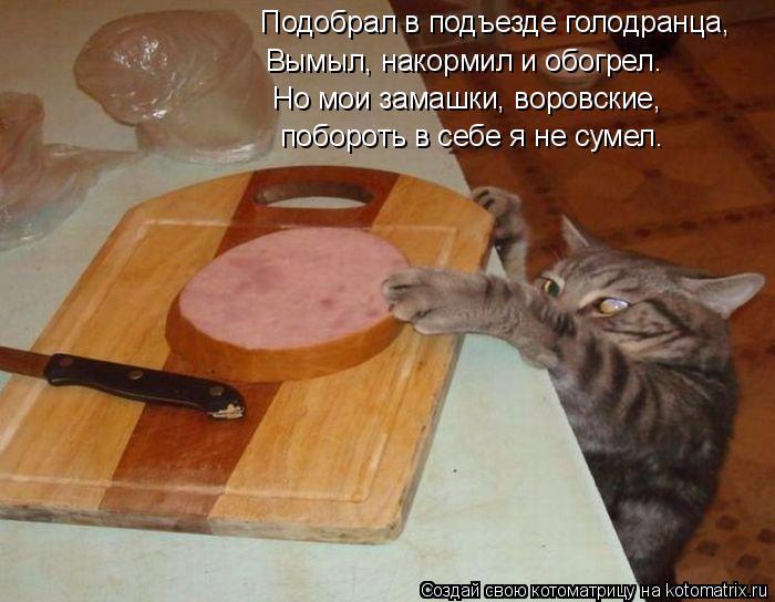 kotomatritsa_HU (700x544, 301Kb)