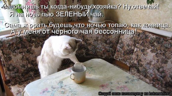 kotomatritsa_JR (700x392, 335Kb)