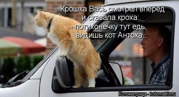 kotomatritsa_ju (625x340, 164Kb)