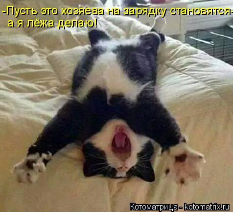 kotomatritsa_K6 (476x432, 161Kb)
