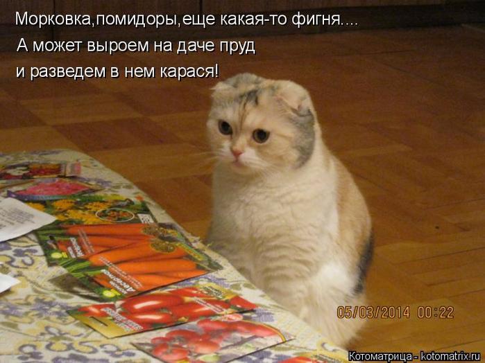kotomatritsa_kh (700x524, 385Kb)