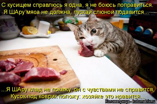 kotomatritsa_kw (640x426, 297Kb)