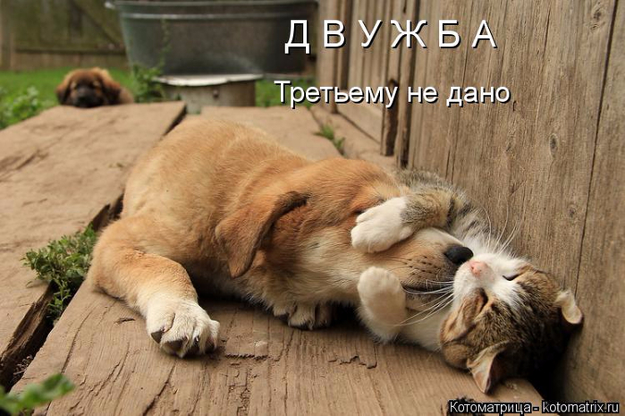 kotomatritsa_NU (700x465, 332Kb)