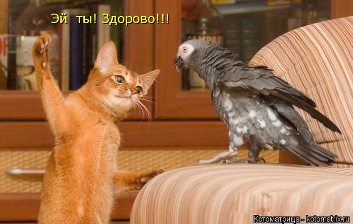 kotomatritsa_Q3 (700x444, 322Kb)