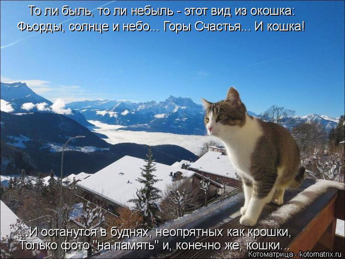kotomatritsa_RV (700x524, 392Kb)