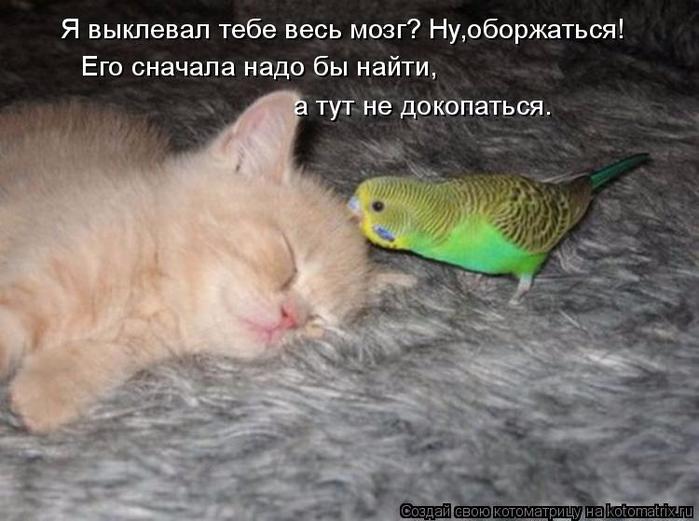 kotomatritsa_T (700x521, 274Kb)