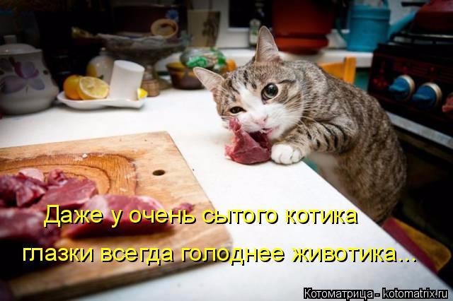 kotomatritsa_w (3) (640x426, 239Kb)