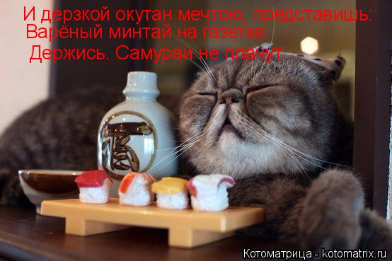 kotomatritsa_WW (554x369, 196Kb)