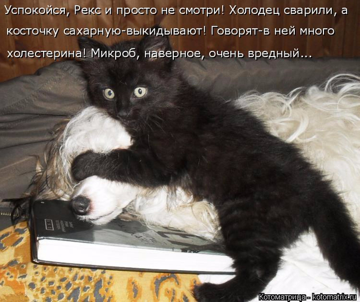 kotomatritsa_Y_ (700x587, 382Kb)