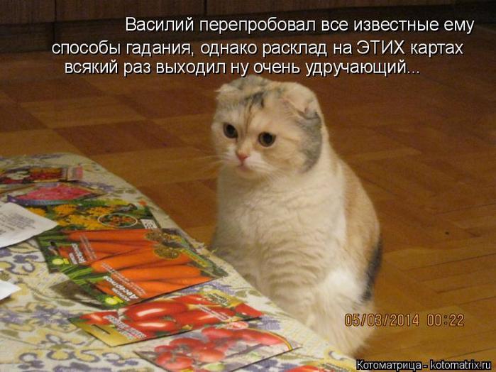 kotomatritsa_z (700x524, 400Kb)