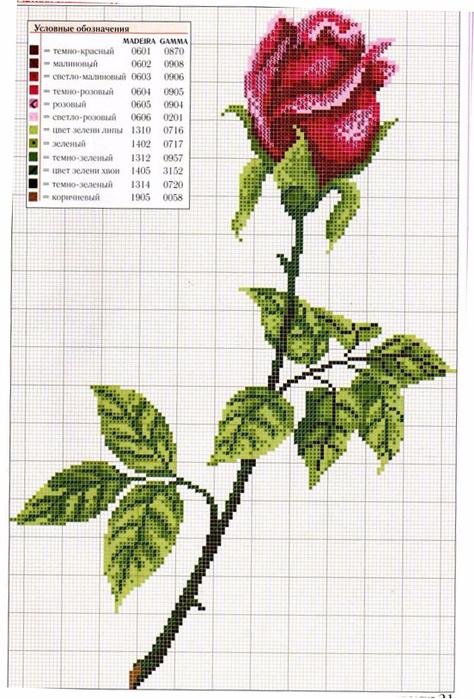 roza5 (474x700, 402Kb)