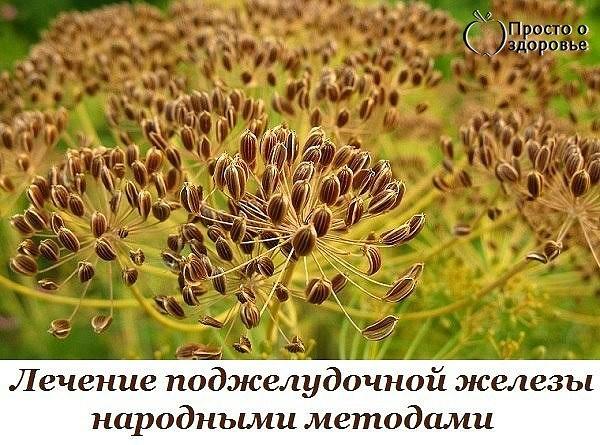 . Семена укропа (600x445, 95Kb)