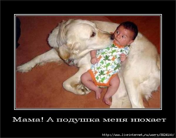 smeshnie_kartinki_134928105203102012218 (600x471, 98Kb)