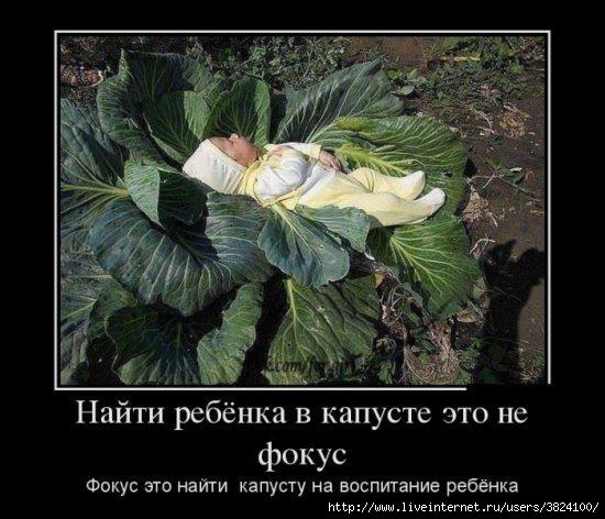 smeshnie_kartinki_1366133362160420131798 (550x472, 150Kb)
