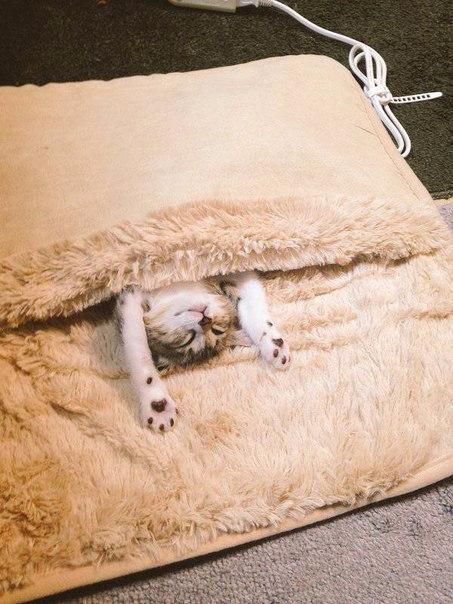 смешные кошки фото 2 (453x604, 263Kb)