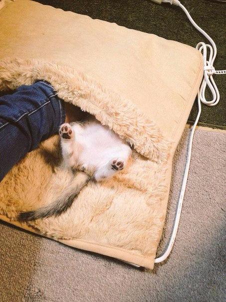 смешные кошки фото 4 (453x604, 292Kb)