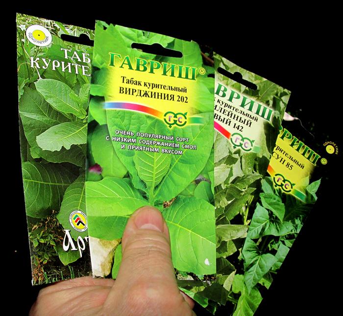 семена курительного табака/683232_tabak (700x646, 457Kb)