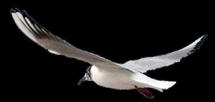 4442332_bird (700x334, 103Kb)
