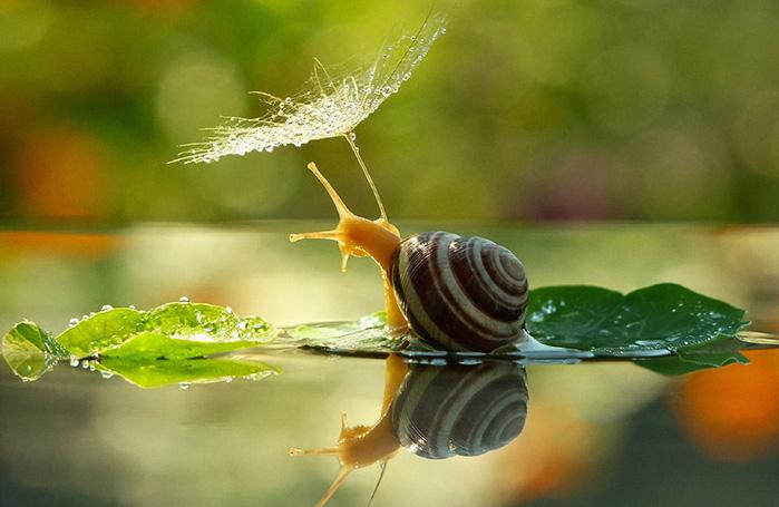 snail-rain (699x455, 109Kb)