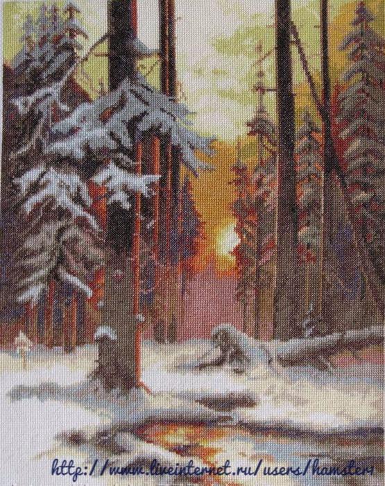 ВХ-1076 Закат в снежном лесу  (555x700, 203Kb)