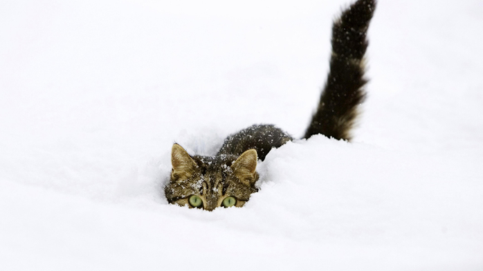 cat_snow_hiding_winter_animals_ultra_3840x2160_hd-wallpaper-71466 (700x393, 126Kb)