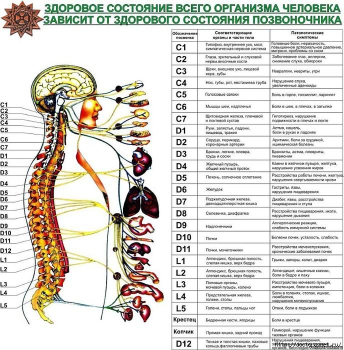 5239983_pozvonochnik_i_bolezni (688x700, 383Kb)
