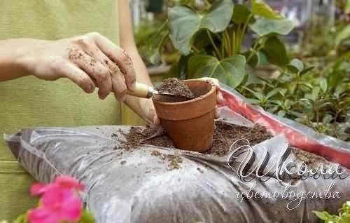 Подкормка комнатных растений (500x318, 123Kb)