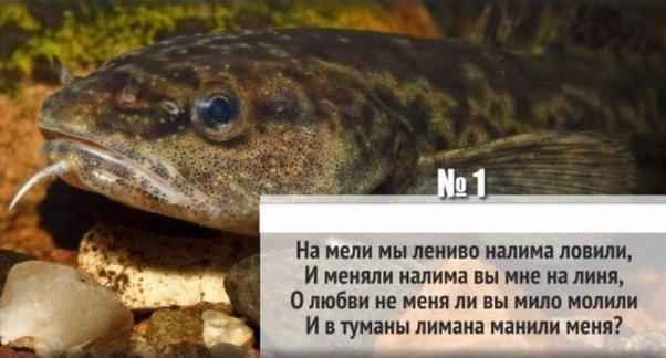4465417_skorogovorki (602x324, 44Kb)