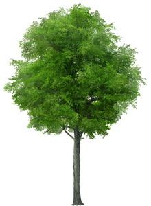 tree_38_pre (220x300, 23Kb)
