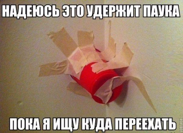 smeshnie_kartinki_14107827743 (600x434, 219Kb)