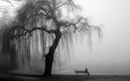 tree_103760_4395 (500x313, 47Kb)