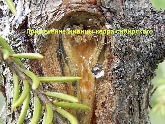 гвоздика от паразитов организме