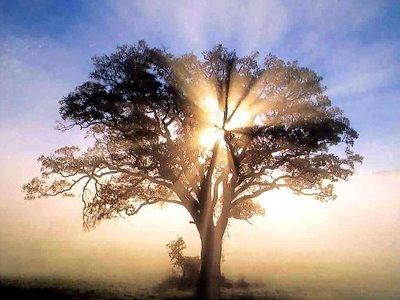 oak_tree_1_copy (400x300, 29Kb)