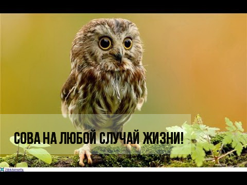 3925073_8FuKZ_XGKDkjj_r5bukJ8 (480x360, 54Kb)