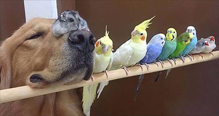 dogbirds (700x372, 188Kb)