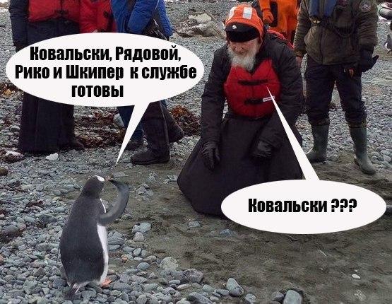 ������� � ����������� ������))) #��_�_����������/3019710_Pingvin_dokladivaet_Patriarhy (555x430, 80Kb)