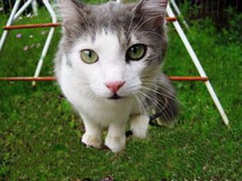 cat-240855__180 (350x263, 40Kb)