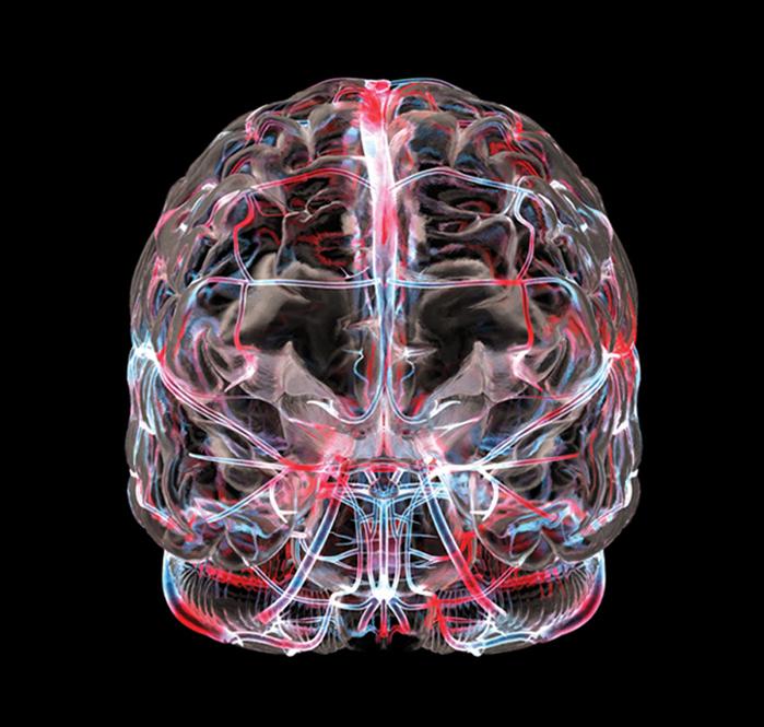 brain (700x665, 316Kb)