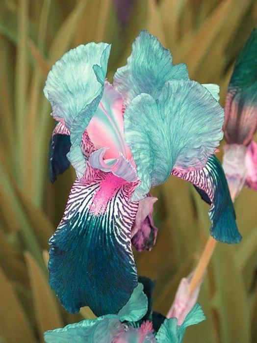 flowers-inspiration4 (524x700, 392Kb)