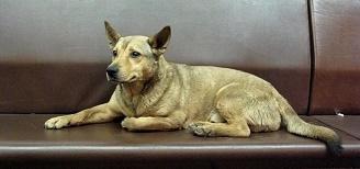 Собака (328x154, 24Kb)