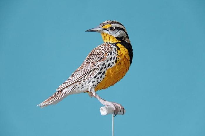 бумажные птицы Дианы Бельтран Эрерра 1 (700x466, 128Kb)