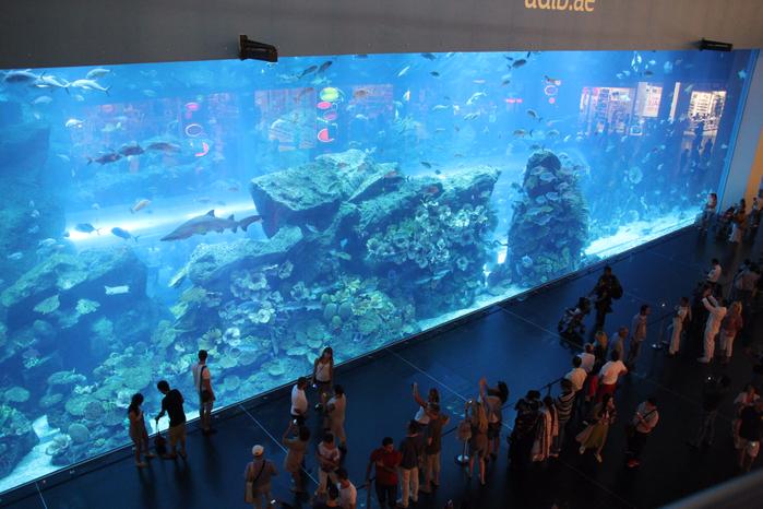 дубайский аквариум в дубай молл 1 (700x466, 457Kb)