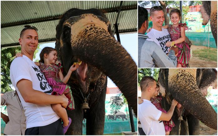 2015 10 08 Джайпур слоны (700x437, 472Kb)