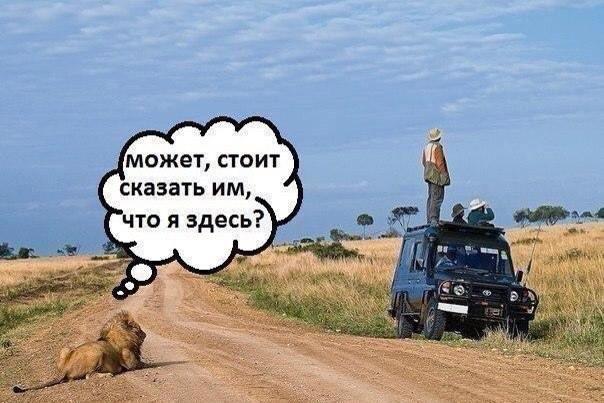 3983111_lion11813237669893_n (604x403, 46Kb)